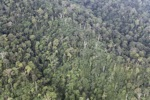 Rain forest in Malaysian Borneo -- sabah_1983