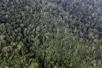 Jungle in Malaysian Borneo -- sabah_1984