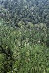 Imbak Canyon Dipterocarp forest