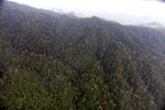 Malaysian Borneo forest -- sabah_1988