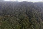 Forest in Sabah