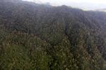 Forest in Sabah, Malaysia -- sabah_1991