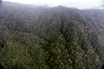 Borneo rain forest -- sabah_1992