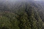 Borneo rainforest in Malaysia -- sabah_1993
