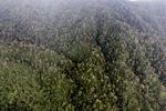 Borneo rainforest in Sabah -- sabah_1994