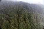 Rain forest in Malaysian Borneo -- sabah_2001