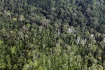 Jungle in Borneo -- sabah_2005