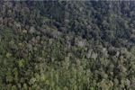 Malaysian Borneo forest -- sabah_2006