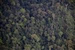 Forest in Sabah -- sabah_2008