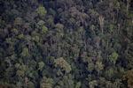 Borneo rain forest -- sabah_2010