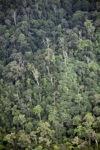 Rain forest in Borneo -- sabah_2015