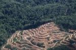 Deforestation in Borneo -- sabah_2020