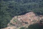 Deforestation in Borneo -- sabah_2021