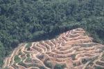 Deforestation in Borneo -- sabah_2022