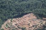 Deforestation in Borneo -- sabah_2023