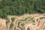Deforestation in Borneo -- sabah_2025