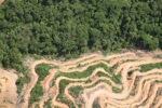 Deforestation in Borneo -- sabah_2026