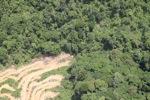 Deforestation in Borneo -- sabah_2028