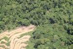 Deforestation in Borneo -- sabah_2029