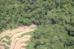 Deforestation in Borneo -- sabah_2030