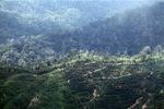 Deforestation in Borneo -- sabah_2033
