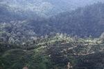 Deforestation in Borneo -- sabah_2034