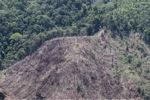 Deforestation in Borneo -- sabah_2039