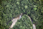Malaysian Borneo forest -- sabah_2046