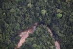 Rainforest in Malaysian Borneo -- sabah_2047