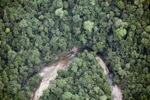Jungle in Malaysian Borneo -- sabah_2049