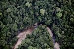 Malaysian Borneo forest -- sabah_2053