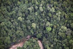 Forest in Sabah, Malaysia -- sabah_2056