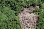 Deforestation in Borneo -- sabah_2063
