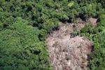 Deforestation in Borneo -- sabah_2066