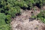 Deforestation in Borneo -- sabah_2067