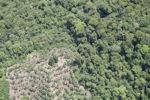 Deforestation in Borneo -- sabah_2068