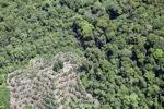 Deforestation in Borneo -- sabah_2069