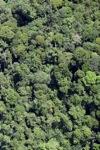 Borneo forest -- sabah_2070
