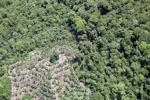 Deforestation in Borneo -- sabah_2071