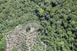 Deforestation in Borneo -- sabah_2072