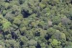 Deforestation in Borneo -- sabah_2073