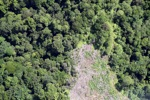 Deforestation in Borneo -- sabah_2075