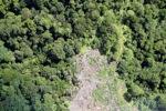 Deforestation in Borneo -- sabah_2076