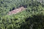 Deforestation in Borneo -- sabah_2078