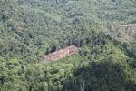 Deforestation in Borneo -- sabah_2079