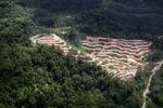 Deforestation in Borneo -- sabah_2083