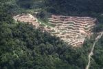 Deforestation in Borneo -- sabah_2086