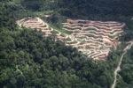 Deforestation in Borneo -- sabah_2088