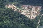 Deforestation in Borneo -- sabah_2089