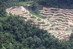 Deforestation in Borneo -- sabah_2090